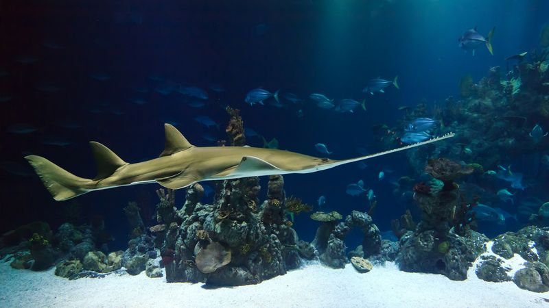 Remote access ensures the operational security of large aquariums